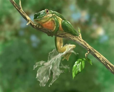 can frogs shed entomology do preying mantis eat small frogs quora
