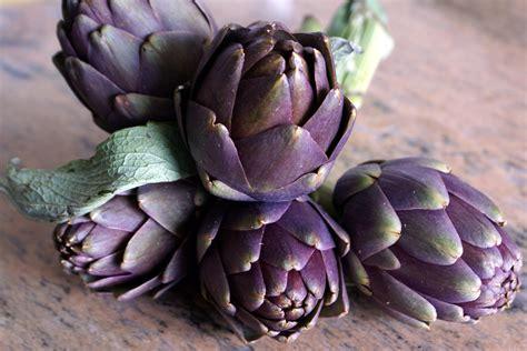 comment cuisiner les artichauts violets l 39 artichaut une plante potagère on consomme le bouton floral recettes d 39 artichauts