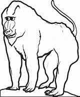 Baboon Coloring Printable Drawings 700px 14kb sketch template
