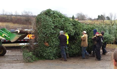 christmas tree farms upstate ny best 28 christmas tree farms upstate ny 100 cut your 5890