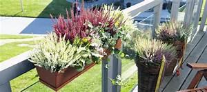 Kübel Bepflanzen Ideen : heide auf balkon und terrasse heidetrends ~ Buech-reservation.com Haus und Dekorationen