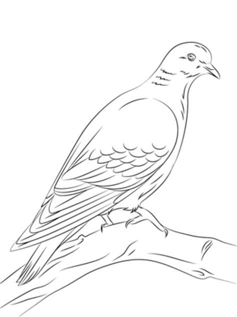 dibujos de aves  imprimir  colorear colorear imagenes