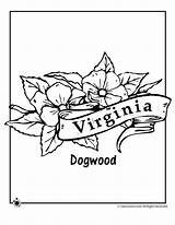 Coloring Pages Virginia West Mountaineer Template Sketch Templates sketch template