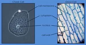 Enjoy Teaching Cells