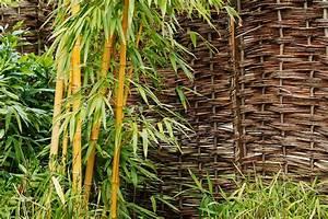Bambous En Pot : bambou en pot ou jardini re quelle vari t comment l ~ Melissatoandfro.com Idées de Décoration