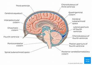 Meninges  Ventricles  Csf And Brain Blood Supply