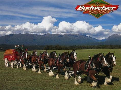 budweiser clydesdales headed to manayunk roxborough pa