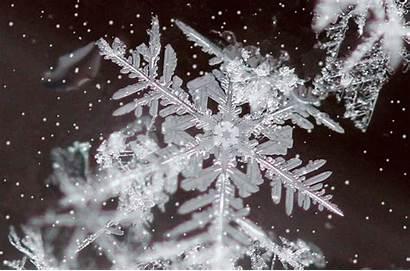 Melt Down Snowflakes Snow Flakes Putnam Recruiting
