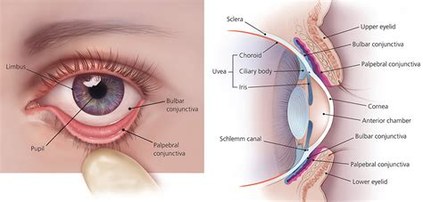 human eye anatomy parts of the eye and structure of the