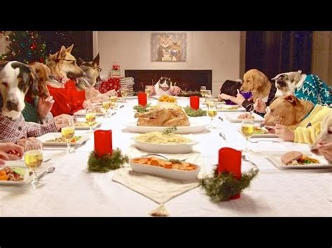 dog eating at table freshpet holiday feast 13 dogs and 1 cat eating with