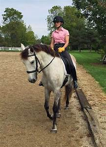 Get Him Fit - Expert how-to for English Riders