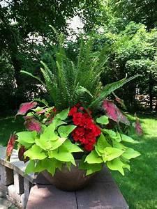 Fleur D Hiver Pour Jardinière : 17 meilleures images propos de plantes vertes et fleurs ~ Dailycaller-alerts.com Idées de Décoration