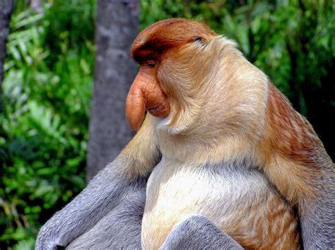 Top 10 Weirdest Looking Animals