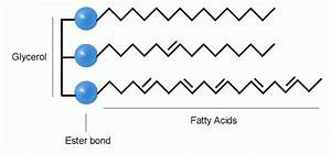 Fatty Acid Analysis