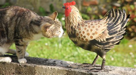 deco cuisine cagne deco poules 28 images deco poule deco poules boutique