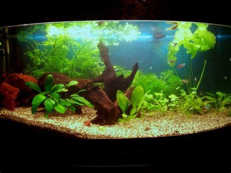 magasin d aquarium en belgique d 233 coration aquarium belgique