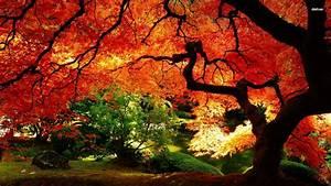 Autumn Landscape Wallpapers - Wallpaper Cave