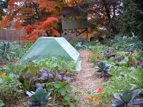 fall vegetable garden grow more vegetables in small gardens and seasons