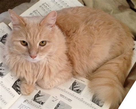lost cat clearwater florida marvin