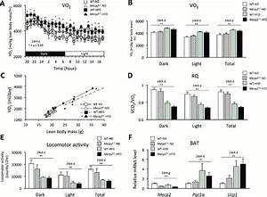 Oxygen Consumption  Locomotor Activity  And Brown Adipose