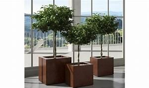 Plante D Intérieur Pas Cher : pots de fleurs discount design pas cher h g tout pour ~ Dailycaller-alerts.com Idées de Décoration