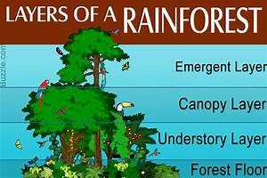 Marvelous And Informative Facts About The Rainforest For