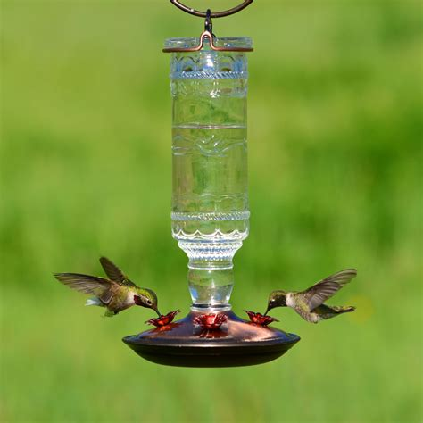 pets hummingbird feeders pet 174 clear antique bottle glass hummingbird feeder