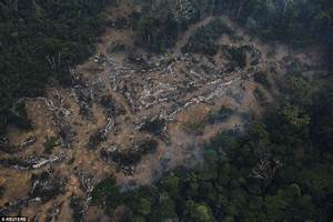 Images show destruction of Brazils' Amazon rainforest ...