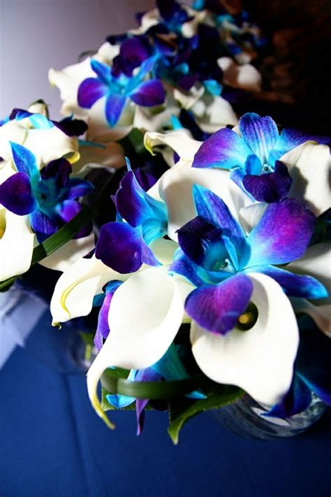 blaue orchidee wunderschoene blume  blau archzinenet