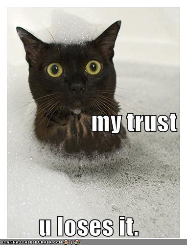 Can You Shower A Cat - beware trust broken can kill that s weblog