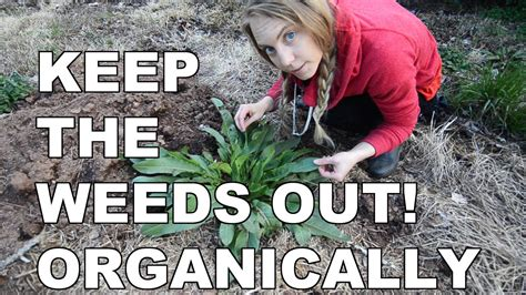 Keep Weeds Out Of Garden by 3 Easy Ways To Keep Weeds Out Of Your New Garden Bed