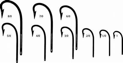 Hook Fishing Sizes Sea Angling Scale Anatomy