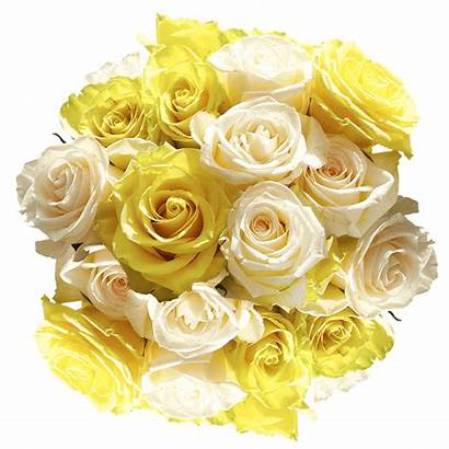 Roses Yellow Flowers Special Delivered Globalrose Stems