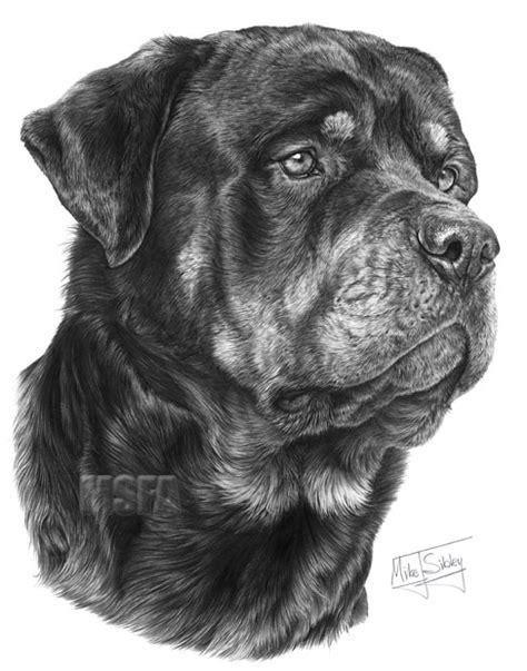 rottweiler fine art dog print  mike sibley
