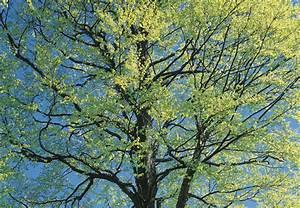 Rosa Blühende Bäume April : b ume schneiden obi ~ Michelbontemps.com Haus und Dekorationen