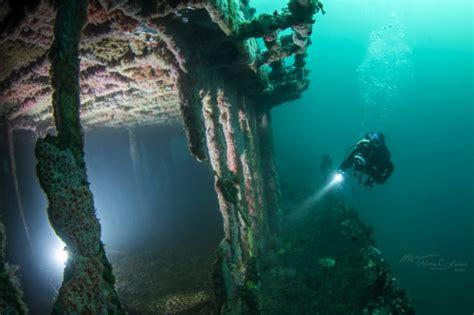 southern california dive trips seas  day scuba