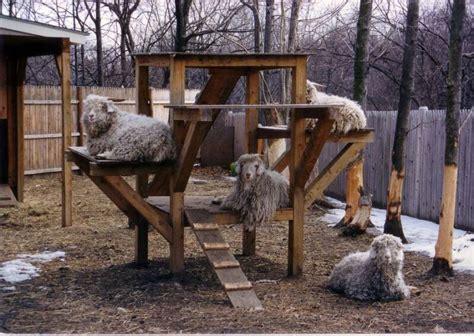 goat playgrounds     kids jealous