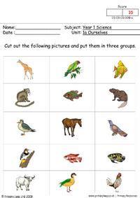 science   senses worksheet primaryleapcouk