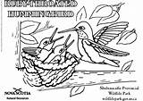 Hummingbird Coloring Ruby Throated Drawing Pages Printable Getdrawings Edupics sketch template