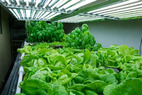 fluorescent light for plants indoor we have solar finally part 2 aquaponicsusa s blog