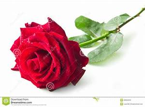 Single Red Rose Images Hd   Bouquet Idea