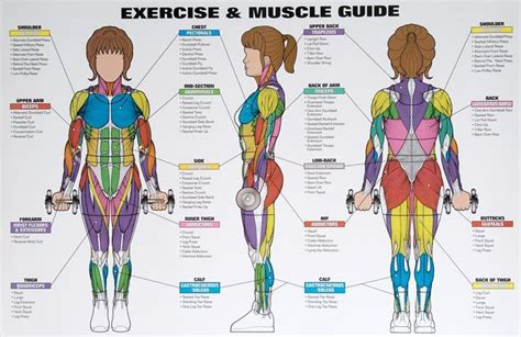 Leg muscles are another story. Best Exercises Targeting Each Muscle Group | Muscle groups ...