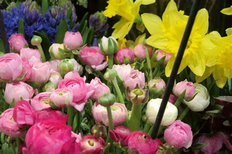 Ko darīt, lai pavasara ziedi vāzē priecētu pēc iespējas ...