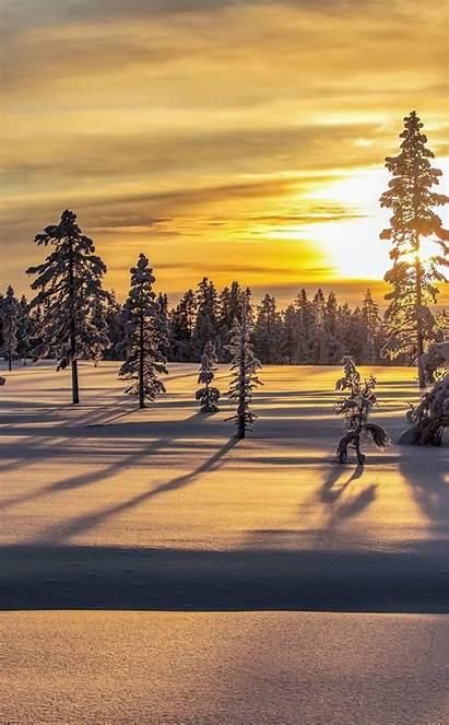 Snow Sunrise Winter Tree Layer Wallpapers Morning