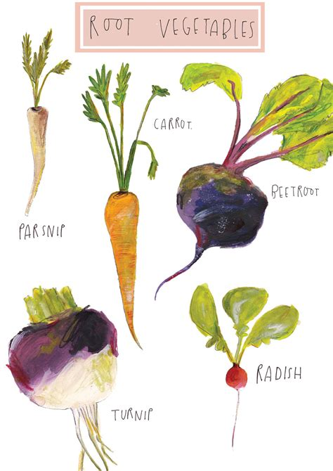 Root Vegetables Limited Edition Illustration By Faye Bradley