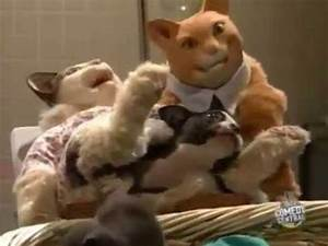 TV Funhouse Cat Giving Birth - YouTube