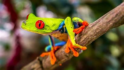 Frog 4k Tree Awesome Wallpapers Frogs Animals