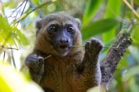 Types of Species - Zahamena National Park