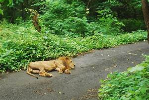 Sanjay Gandhi National Park, Mumbai | We went for a tiger ...
