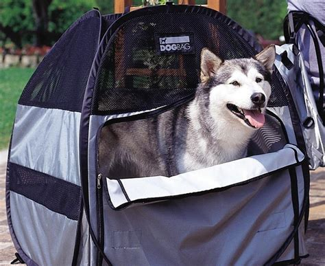 finding  perfect cat carrier choosing   size crate dog carrier backpack